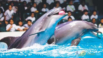 Тур Дельфинарий в Кемере