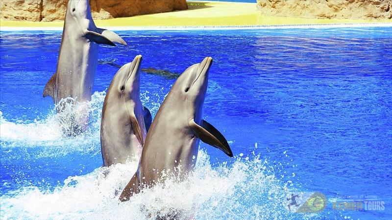 Tour dolphinarium in Kemer